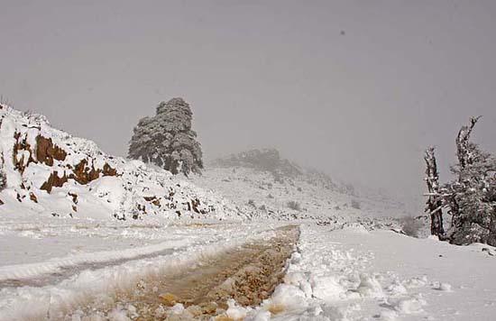 Carril de acceso a las cumbres de la Sierra de las Nieves.