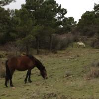 Caballos pastando en la zona de Conejeras.