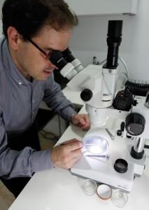 El microscopio es un elemento fundamental para este trabajo.