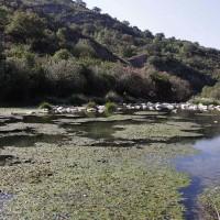 El PP reclama a la Junta y al Gobierno central que suscriban un convenio para acabar con la contaminación del río Guadiaro