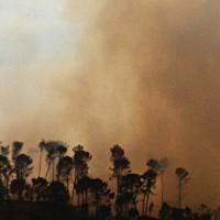 Una quema de hojas pudo provocar el incendio forestal de Igualeja