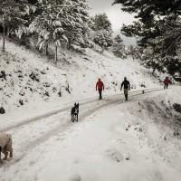 El posible nombramiento como Parque Nacional de la Sierra de las Nieves, a debate