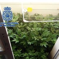 La Policía Nacional interviene 127 plantas de marihuana en un vivienda