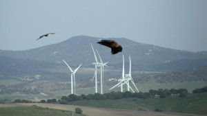 Los aerogenerados se encuentran en el camino de muchas aves