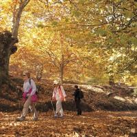 El 'Bosque de cobre' del Genal se llena de visitantes
