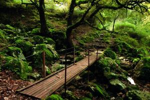 Camino hacia el poblado por el bosque