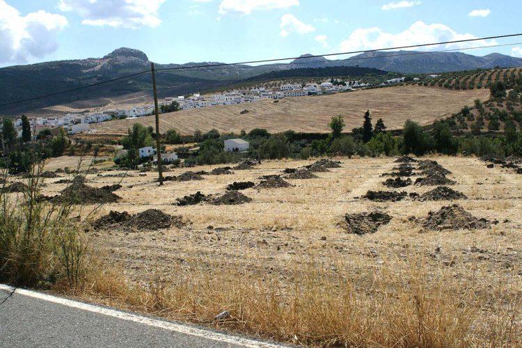 El Seprona remite un informe a Patrimonio tras localizar plantaciones de olivos sobre un yacimiento arqueológico romano cerca de Serrato