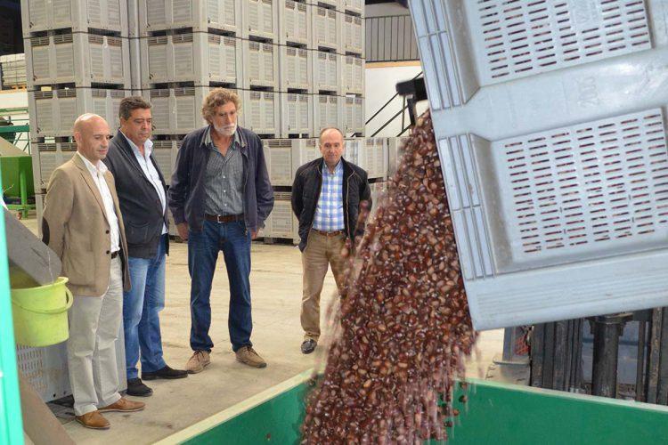Pujerra pone en marcha la primera fábrica de harina de castaña de Andalucía
