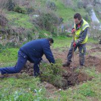 Agentes de Medio Ambiente recogen semillas de pinsapos dentro del Plan de Recuperación de esta especie en peligro de extinción