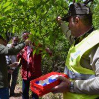 El Ayuntamiento de Cartajima ayudará economicamente a los productores de castaña para combatir la plaga de la avispilla