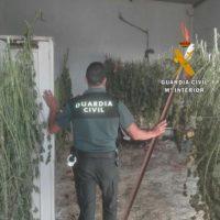 La Guardia Civil detiene a cuatro personas de origen lituano por cultivar marihuana en la Serranía