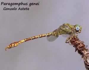 Otra`imagen de este insecto volador.