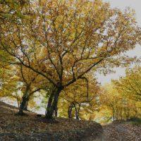 La 'Primavera de cobre' comienza a mostrarse en todo su esplendor en el Valle del Genal