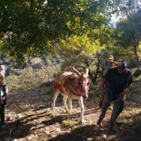 Decenas de personas participaron en la V Ruta Arriera 'Serranía de Ronda' que discurrió entre Grazalema y El Bosque