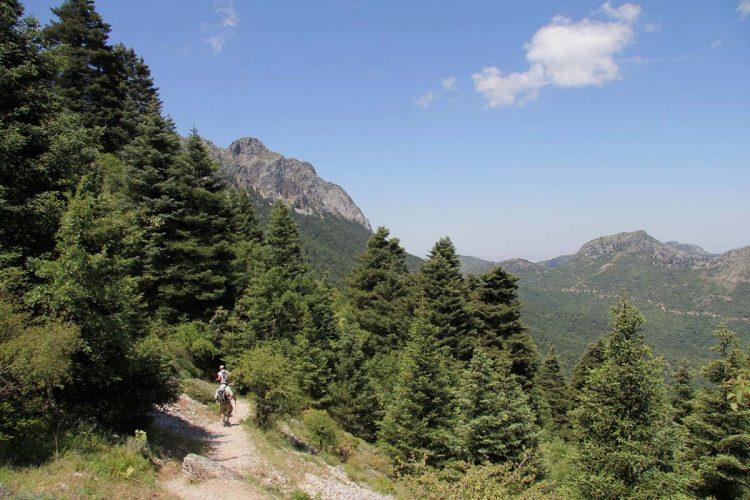 Ecologistas en Acción denuncia que la Junta Rectora del Parque Natural Sierra de Grazalema lleva paralizada más de un año