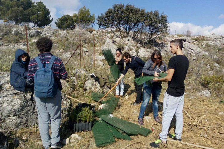 Potencian la presencia de pinsapos en Parauta con la plantación de cien ejemplares