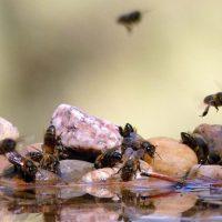 Fauna de la Serranía de Ronda: Las abejas en peligro