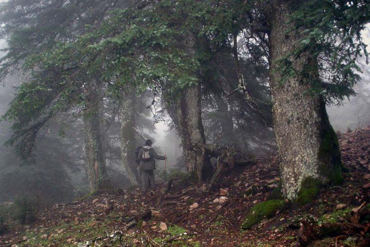 Entran en vigor los nuevos planes de ordenación de los recursos naturales del futuro Parque Nacional de la Sierra de las Nieves