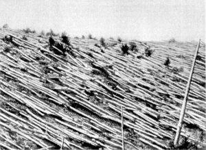 Numerosos árboles fueron talados por este evento.