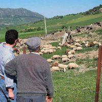 Condenan a un hombre a tres años de cárcel por estafar a ganaderos de Ronda y de Aracena