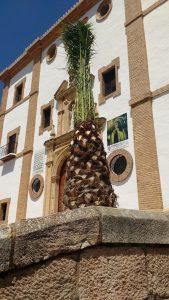 Las palmeras se han plantado en la plaza de La Merced.