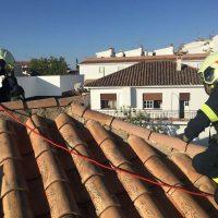 Los bomberos rescatan a un buitre que quedó atrapado en el tejado de una vivienda de Ronda