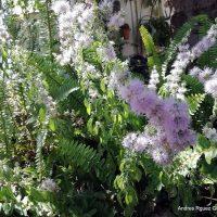 Plantas de la Serranía de Ronda: Poleo (Mentha pulegium)