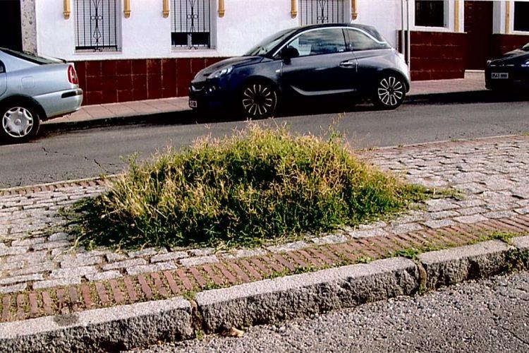 APR carga contra el concejal de  Parques y Jardines por el lamentable estado de abandono que presentan las zonas verdes de Ronda