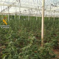 La Guardia Civil desmantela una plantación de marihuana en el término municipal de Benadalid