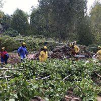 Dos retenes del Infoca trabajan en Arriate para retirar la arboleda y la maleza arrastrada por la crecida del arroyo de la Ventilla tras las lluvias