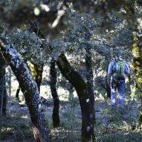 Senderismo en Parauta, el encinar bajo de la Sierra de las Nieves