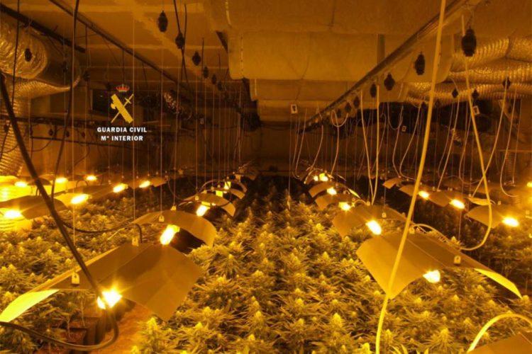 Tres detenidos por cultivar 1.200 plantas de marihuana en Ronda