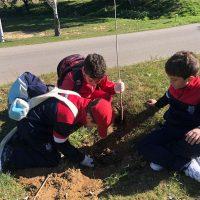 Medio Ambiente organiza una repoblación en el parque periurbano de La Dehesa con estudiantes del colegio Juan de la Rosa