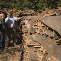 Finaliza la recolección del corcho en la Serranía de Ronda con un descenso de producción por falta de lluvias