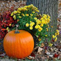 Ideas para un jardín de otoño