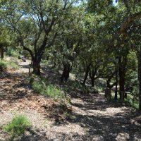 Celebran en Pujerra la jornada 'Conoce tu entorno'