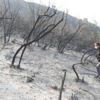 La Junta  invertirá 4,6 millones de euros en las obras de emergencia del incendio de Sierra Bermeja