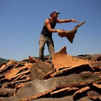 Comienzan los trabajos de saca del corcho en los Montes de Propios de Ronda