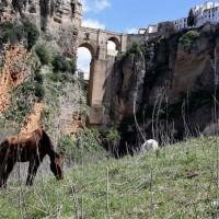 Turismo Ronda diseña una campaña para relanzar este sector una vez que pase la crisis sanitaria