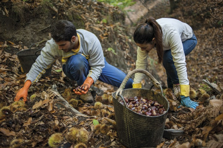 Más del 90 por ciento de jóvenes encuestados en la Serranía considera que la sociedad no valora el trabajo en el campo