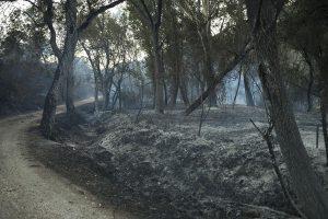 Las llamas han calcinado veinte hectáreas según ha contabilizado el Plan Infoca. Foto Javier Flores.
