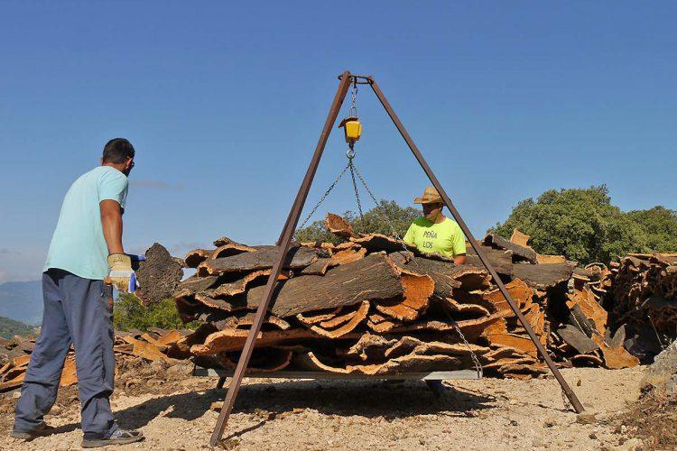 El Ayuntamiento licita los trabajos de la saca del corcho de Los Montes de Propios para esta campaña