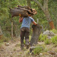 El Ayuntamiento licita el corcho de los Montes de Propios que dejará más de 700.000 euros para Ronda