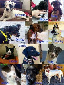Algunas de las mascotas que se pueden adoptar en RAU.