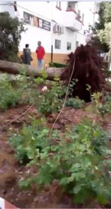 El viento ha arrancado un árbol en San Rafael.