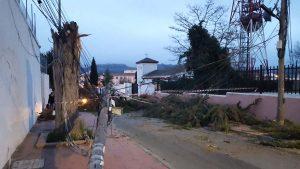 Postes y árboles caídos en calle Dolores Ibárruri.