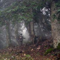 Abren el plazo de alegaciones al anteproyecto del futuro Parque Nacional de la Sierra de las Nieves