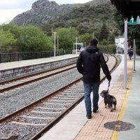 Organizan una marcha entre las estaciones de Arriate y Ronda en defensa del tren rural