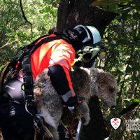 Los bomberos rescatan en las cornisas del Tajo a un perro que estaba a punto a caer por el cortado