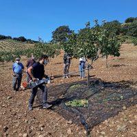 La pedanía rondeña de Los Prados ya cuenta con la primera explotación de pistachos de la comarca